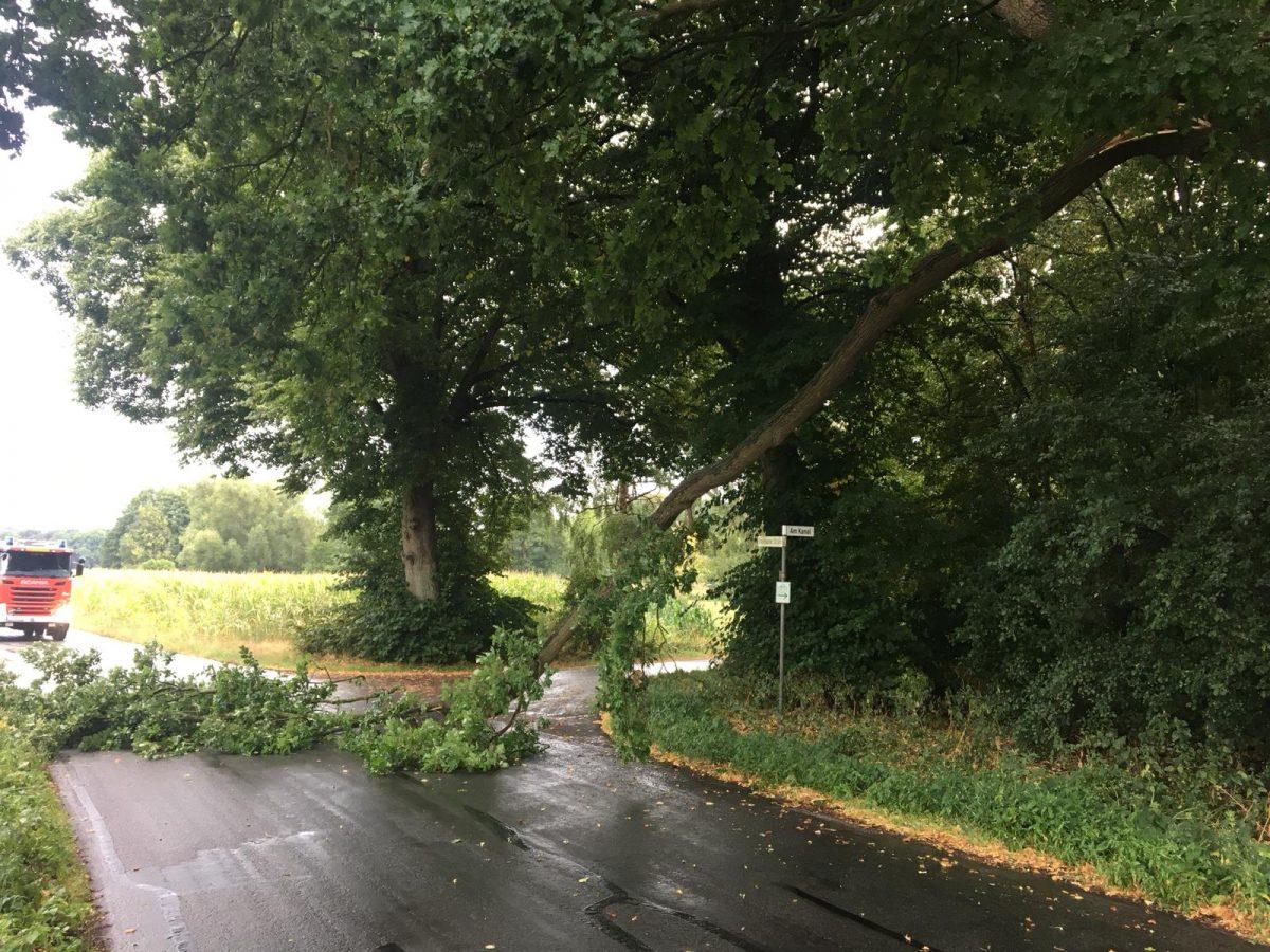 2018-07-28 Baum auf der Straße